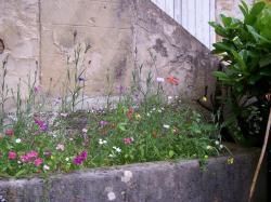 fleurs-1.jpg